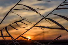 Sunset dry grass sky background Stock Photos