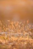 Sunset Dry Grass Stock Photos
