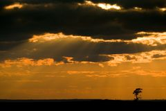 sunset drzewo Obraz Royalty Free