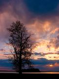 sunset drzewo Fotografia Royalty Free