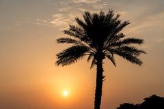 Sunset Dubai Palm Tree UAE royalty free stock photography