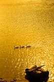 Sunset and Ducks. A bright golden sunset on river with small boat in the sun ray reflections and three ducks swimming through it Royalty Free Stock Photos
