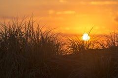 Sunset Dune Stock Image