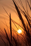 Sunset and dune grass Royalty Free Stock Photos