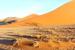 Sunset Dune 45 Sossusvlei, Namibia Royalty Free Stock Photo