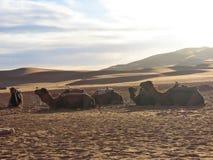 Sunset on the dunes Royalty Free Stock Photo