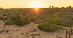 Sunset in dunes with palm trees, sand and vegetation royalty free stock photos