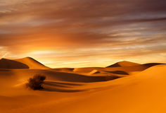 Sunset dunes Royalty Free Stock Image