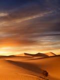 Sunset dunes Stock Photography
