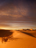Sunset dunes Stock Images