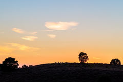 Sunset in Dutch national park The Veluwe Royalty Free Stock Photography
