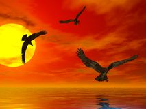 Sunset Eagles. Three eagles flying at sunset above the sea Royalty Free Stock Images