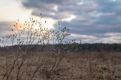 Sunset in early spring on the meadow. Stock Photo