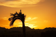Sunset in Egypt Stock Image