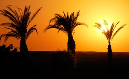 Sunset in Egypt Stock Photography
