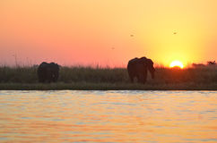 Sunset with elephants Stock Photos