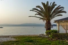 Sunset on embankment and palm tree in Thassos town, Greece Royalty Free Stock Photography