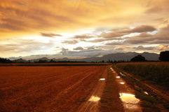 Sunset. Empordà Field at Sunset, Girona, Catalonia, Spain Royalty Free Stock Image