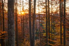 Sunset in the forest. Sunset in the enchanted forest, sun in the frame Stock Image