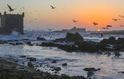Sunset in Essaouira Fortress, Morocco Royalty Free Stock Photo