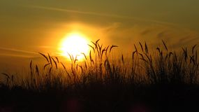 Sunset with European beachgrass stock images