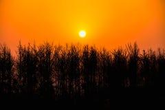 Sunset in the evening. Sunset in the evening and a beautiful tree silhouette Royalty Free Stock Photos