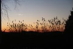 Evening. Sunset evening grass silhouet warm Stock Image