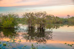 Sunset at the Everglades National Park III Royalty Free Stock Photography