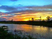 Sunset silhouette in the cypress swamp Stock Images