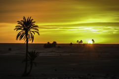 Sunset. Exceptional colors at the time the sun sets Royalty Free Stock Photos
