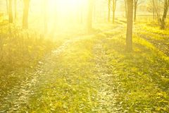 Sunset in fall forest Royalty Free Stock Images