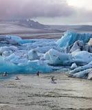 Sunset at the famous glacier lagoon at Jokulsarlon - Iceland Royalty Free Stock Photo