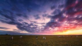 Sunset at the Farm Royalty Free Stock Photography
