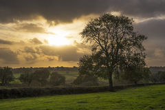 Sunset in farm fields with tree and beautiful cloudy sky, Cornwall, UK Royalty Free Stock Photo