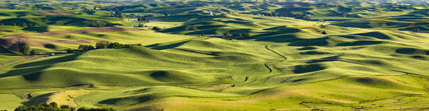 Sunset on Farms, Palouse, Washington. Panoramic view, combining a number of images, at  sunset on the rolling hills of the farmlands in the Palouse, an important Royalty Free Stock Photography