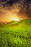 Sunset on a field Royalty Free Stock Photography
