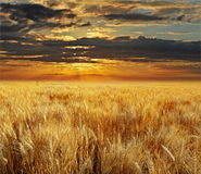 Sunset and field Royalty Free Stock Photo