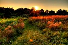 Sunset Field Stock Image