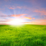 Sunset on field. Sunset and sunbeam on grass field stock images