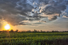 The sunset in the field. The sunset in afternoon on the field Stock Image
