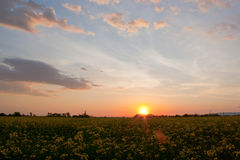 The sunset in the field. The sunset in afternoon on the field Royalty Free Stock Photography