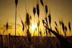 Sunset on field royalty free stock photos
