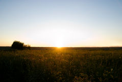Sunset and field Royalty Free Stock Image