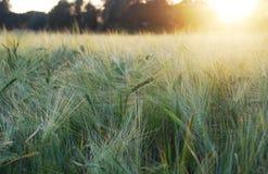 Sunset field. Royalty Free Stock Photo