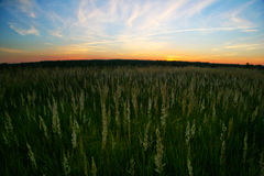 Sunset field Royalty Free Stock Photo