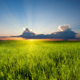 Sunset in field Royalty Free Stock Images