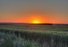 Sunset. At the field in autumn coldness royalty free stock photo