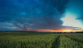 Sunset. Field of barley and beautiful sunset Stock Image