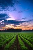 Sunset in the Field Stock Photography
