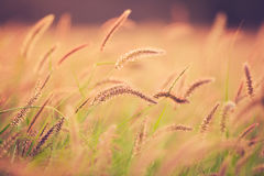 Sunset Field, Beautiful Vibrant Color Stock Images